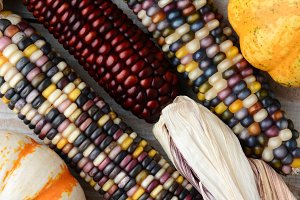 Indian Corn and Gourds
