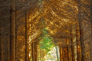 Forest / Tree tunnel