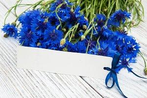 Blue fresh cornflowers