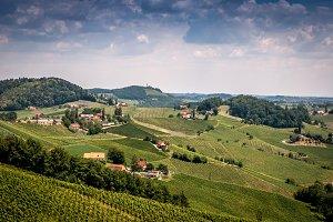 Wine Yards summer