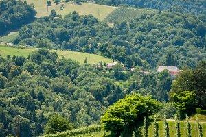 View to wine yards / hills