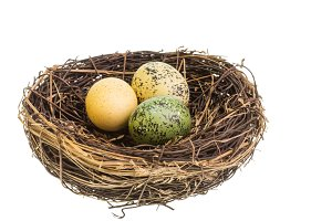 Bird nest and eggs isolated