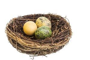 Bird nest and eggs isolated