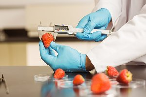 Food scientist measuring a strawberry