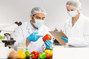 Food scientists examining a pepper