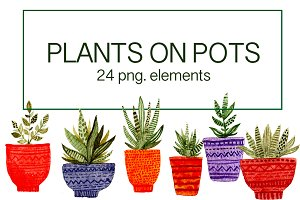 Plants in pots. Watercolor elements.