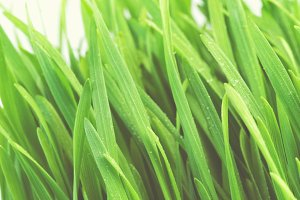 Wheatgrass - Dietary Supplement