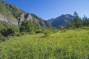Mountain meadow.