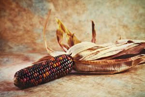 Indian Corn & Husk