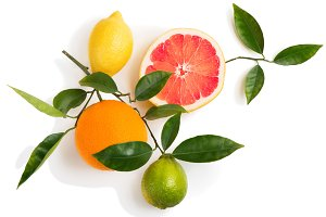 Twig with citrus fruits