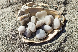 Pebbles in the shell on the sand