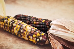 Dried Corn - Fall themes.