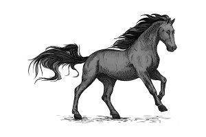 Running black horse for equestrian sport