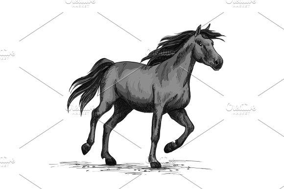 Black Wild Horse Running On Racing Sport