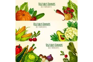 Vegetables and organic veggies vector banners set