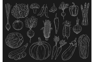 Vegetables vector chalk sketch isolated icons set