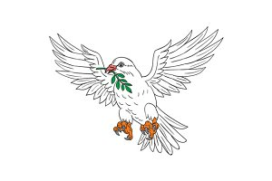 Dove With Olive Leaf Drawing