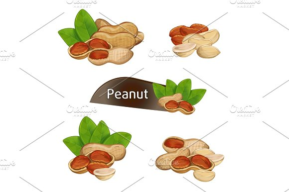 Peanut Kernel In Nutshell With Leaves Set