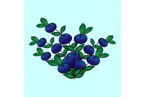 Blue berry Bush blueberries