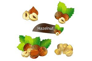 Hazelnut kernel with green leaves set