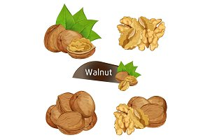 Walnut kernel in nutshell with leaves set