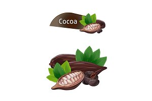 Cocoa pod in nutshell with leaves set