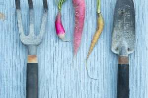 Gardening Tools and Root Vegetables
