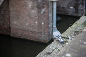 Bird on a Bridge