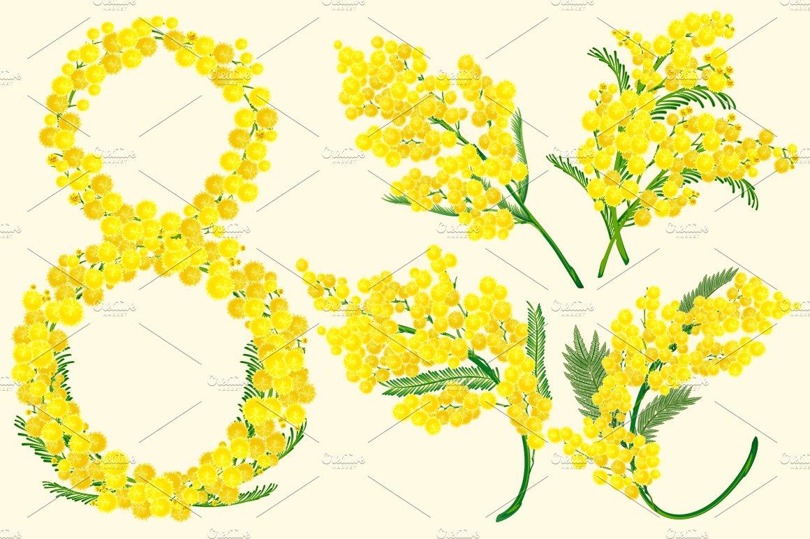 Yellow acacia blossom branch flower illustrations creative market mightylinksfo