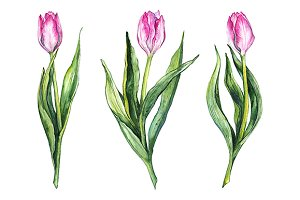 Watercolor tulip flower isolated set
