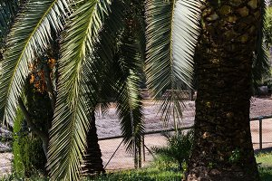 Palm tree in summer park.