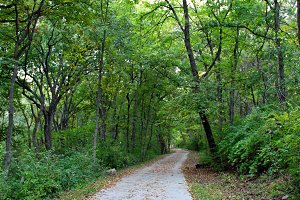 Wooded Nature Trail