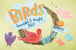 Colorful Bird Illustrations and More