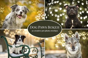 Dog Paws Bokeh photo overlays