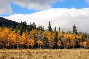 Tree line in the Fall