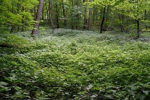 Wetland in Hardwood Forest