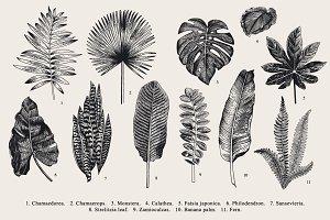 Exotic leaves. B & W