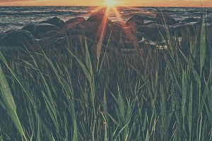 Sunset with the leaves of reeds