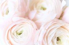 pink coffie