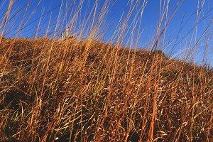Dry grass in Autumn