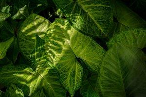 Green Tropical Leaf Texture