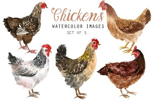 Watercolor chickens