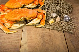 Two Dungeness crabs with net