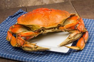 Dungeness crab on plate