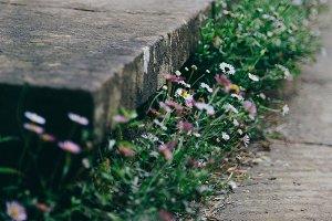 Flowers Surround a Concrete Step
