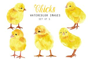 Watercolor chicks