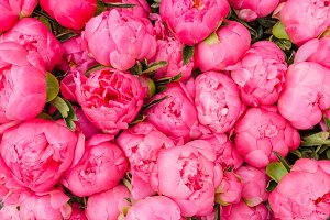 Peony flowers at the market