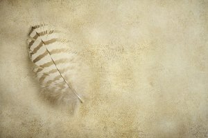 Feather on old paper background