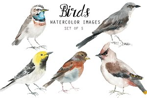 Watercolor Birds II