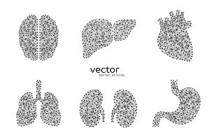 Vector illustrations of human organs